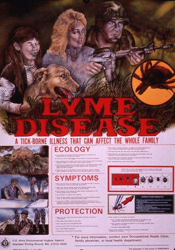 Supplements for Lyme Disease Treatment in Dogs